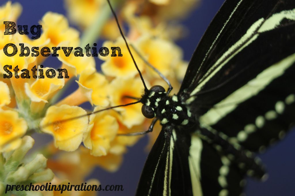 Bug Observation Station Preschool Inspirations