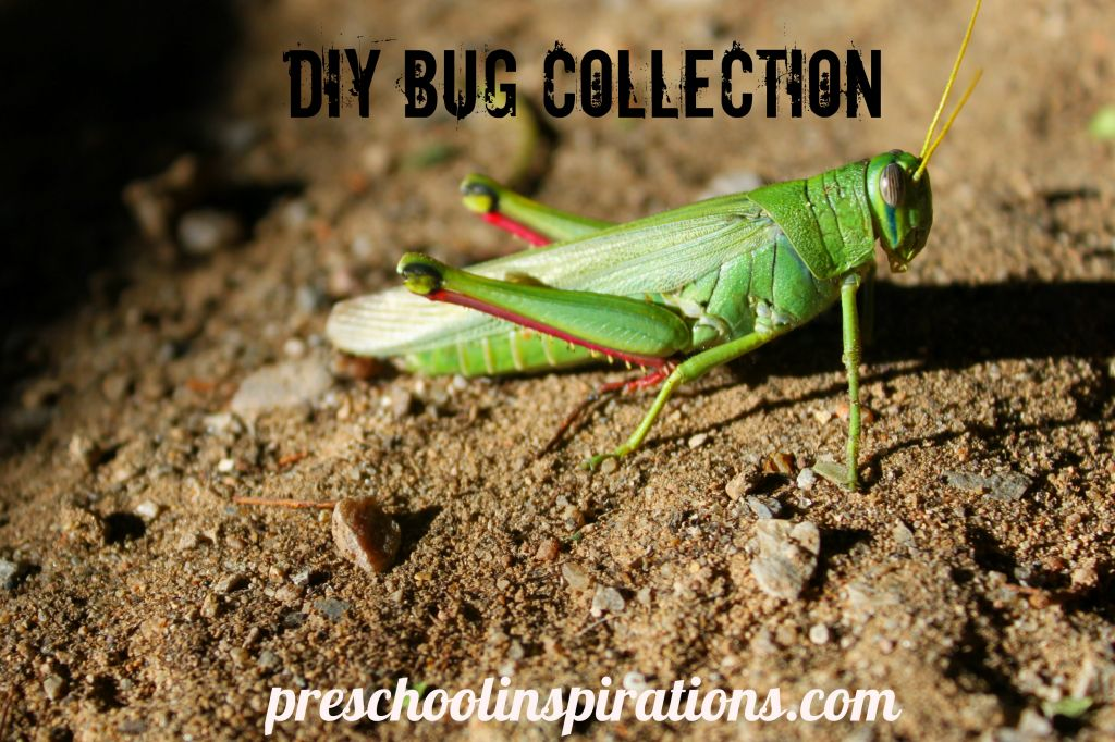 DIY Bug Collection by Preschool Inspirations