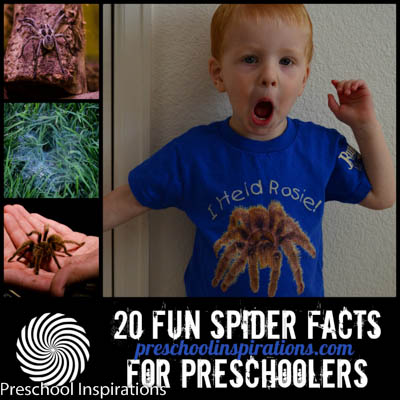 20 Fun Spider Facts by Preschool Inspirations