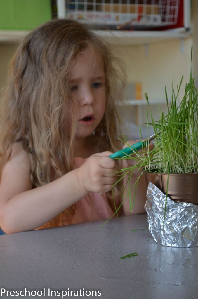 Setting up Science by Preschool Inspirations-11