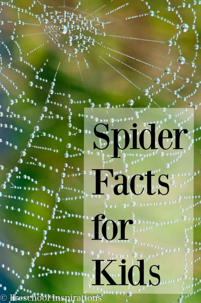 Here are 20 fun spider facts for kids! They are perfect for small groups, circle time, or one on one. Spiders are helpful creatures, and the more we know about them, the less we will be afraid.