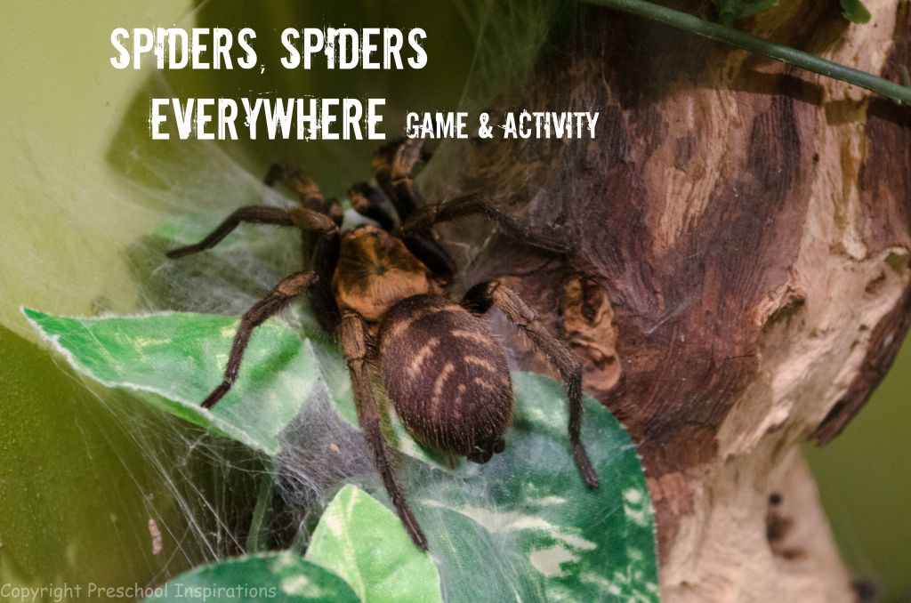 Spiders, Spiders Everywhere by Preschool Inspirations