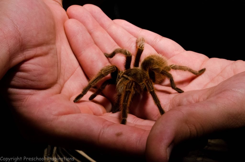 Rosie the Tarantula by Preschool Inspirations