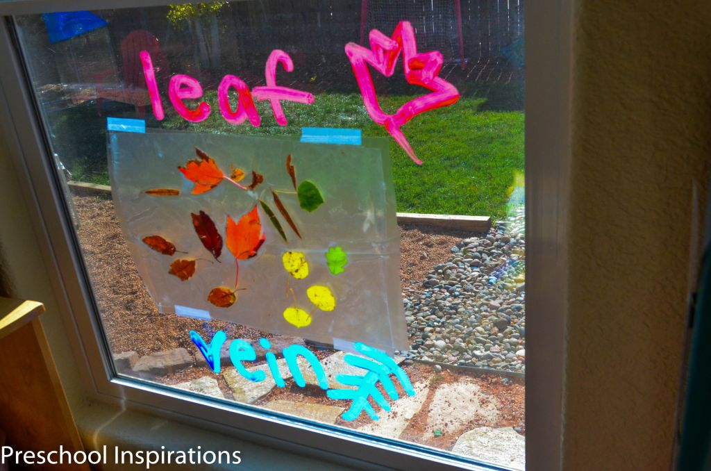 Window Wall by Preschool Inspirations-5