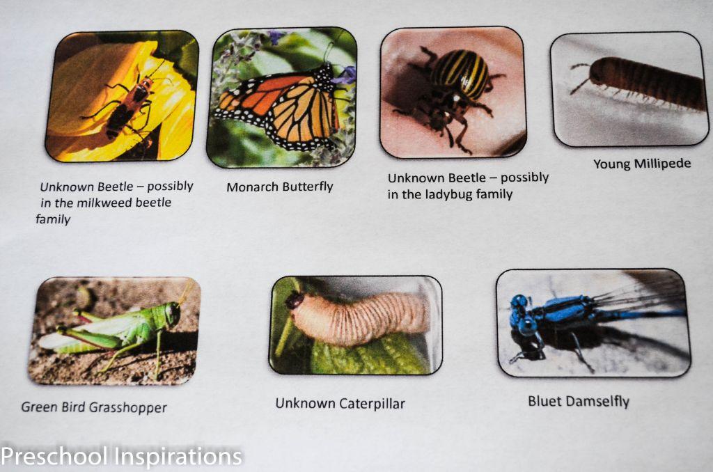 Bug Dominoes