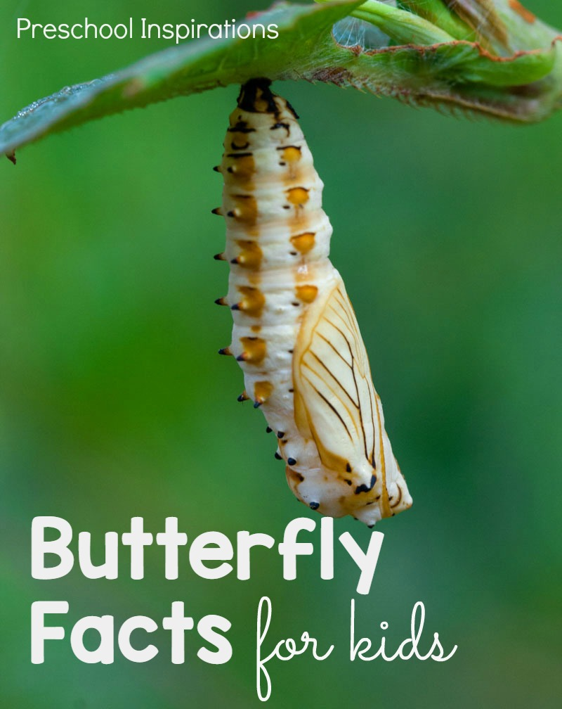 Fun Butterfly Facts for Kids - Preschool Inspirations