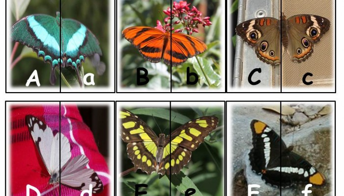 Butterfly Alphabet Matching Cards