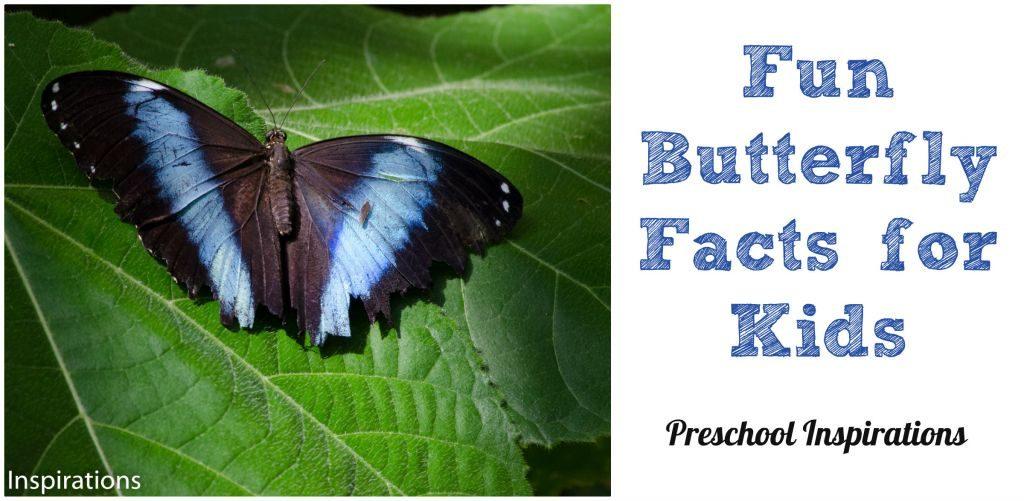 fun facts about butterflies - Khafre