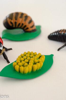 Ladybug Facts for Kids