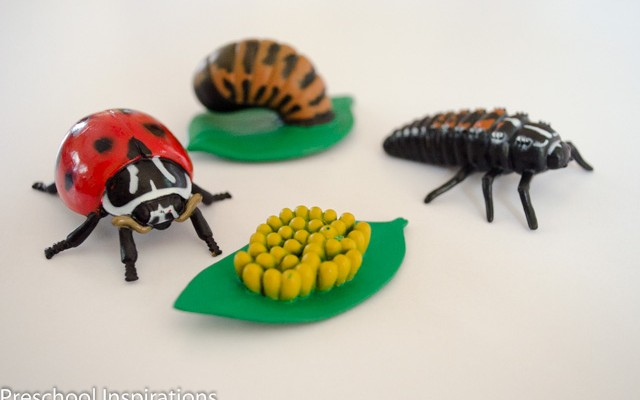 Ladybug Facts ~ Preschool Inspirations-4