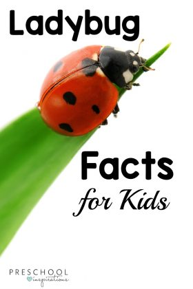 ladybug on a leaf with the text ladybug facts for kids