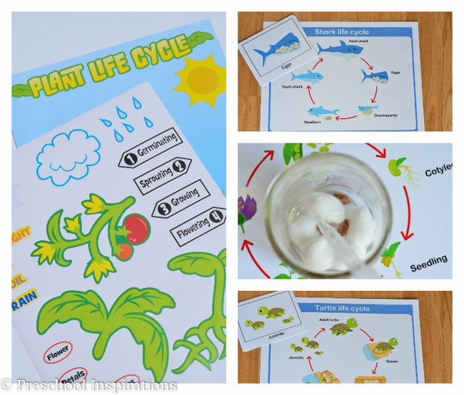 Teach children about science and nature with life cycles-2