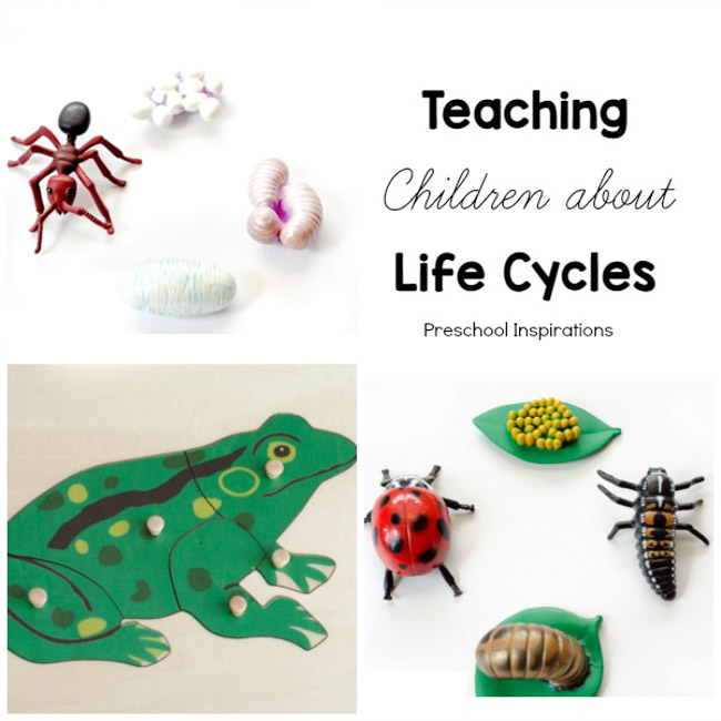 Teach children about science and nature with life cycles