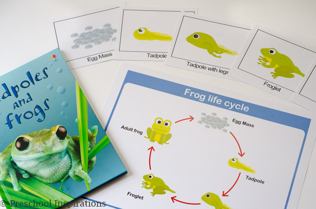 Teaching children about life cycles-6