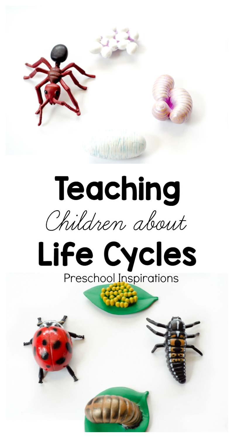 Teaching children about life cycles with hands-on learning materials