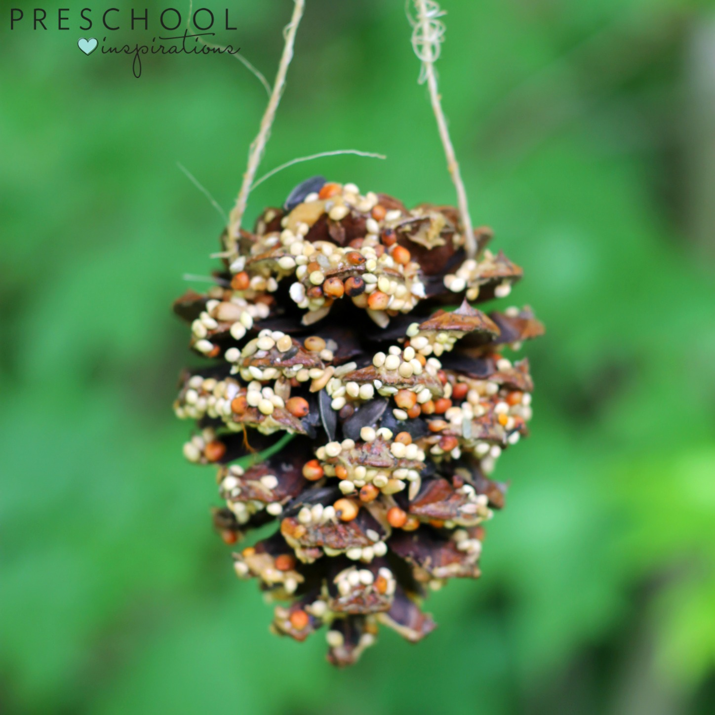 Completed pine cone bird feeders