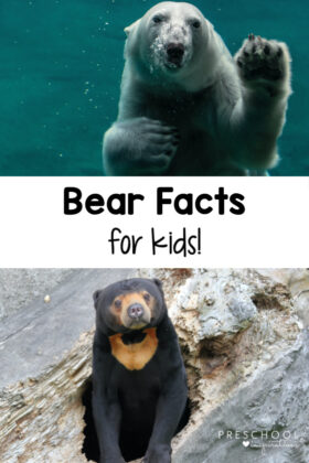 pinnable image of two bears with the text bear facts for kids
