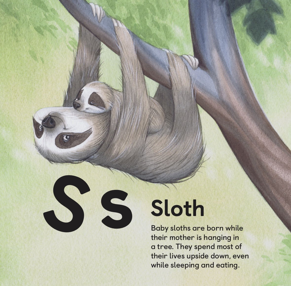 Sloth mom hanging with baby sloth