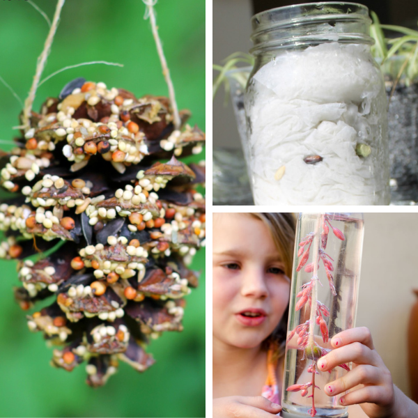 collage of three different nature Activities for preschool