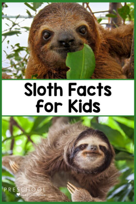 pinnable image of two sloths and the text 'sloth facts for kids'