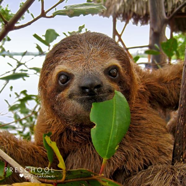 cute sloth smiling at the camera